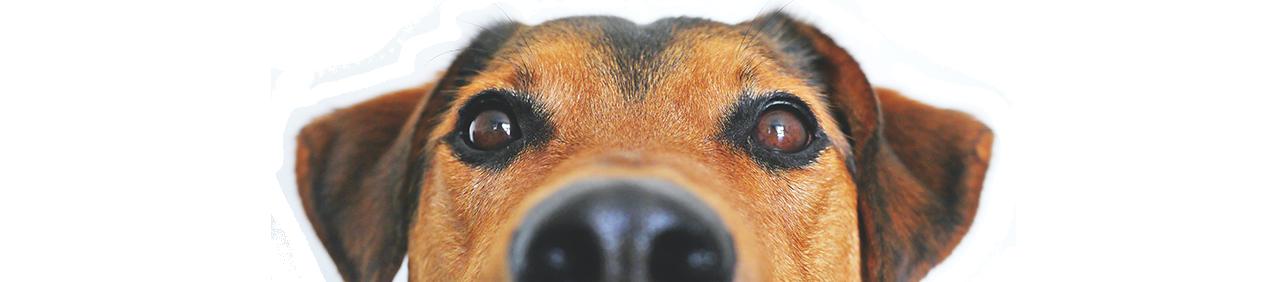 Reale mutua cane polizza